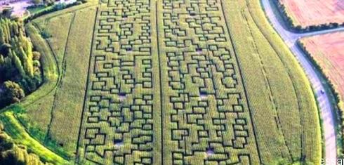 labyrinthe géant bordeaux